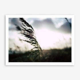 Reeds on the Beach 4 Art Print