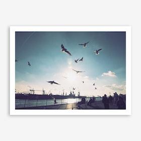 Seagulls at Hamburg Harbour 1