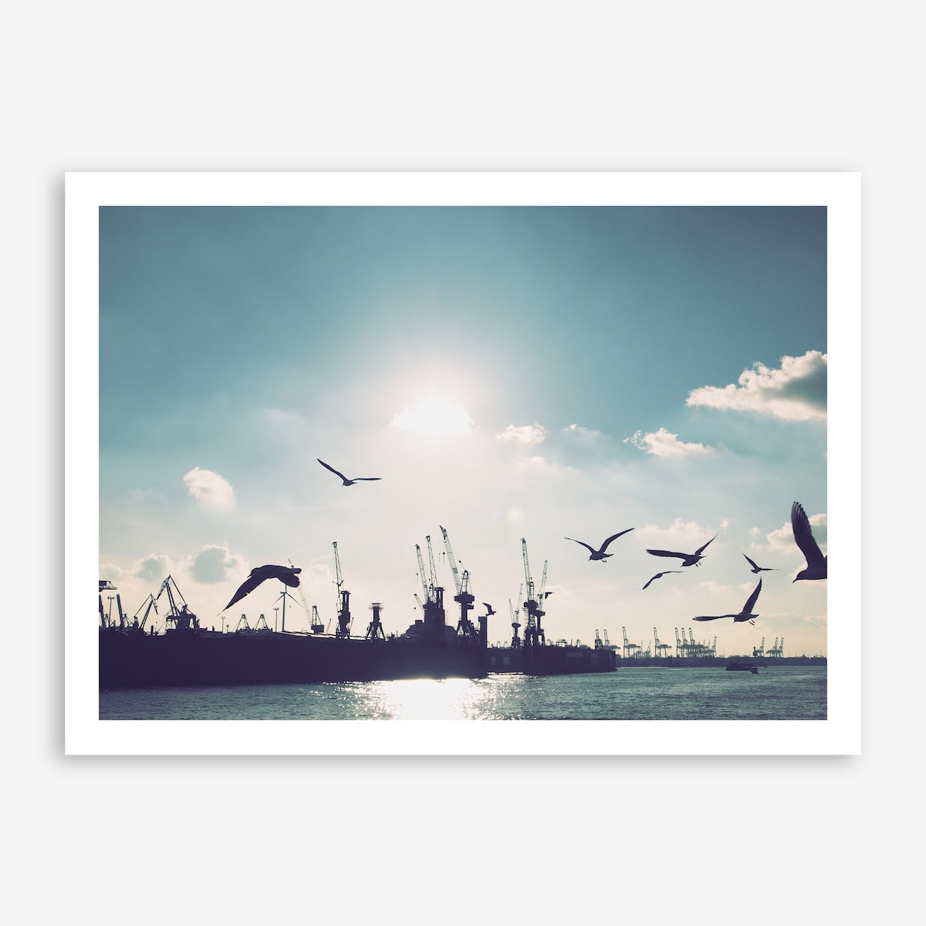 Seagulls at Hamburg Harbour 3