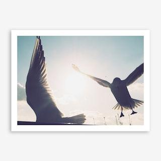 Seagulls at Hamburg Harbour 4 Art Print
