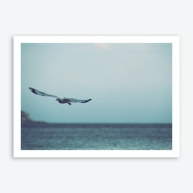 Seagull Flying Art Print