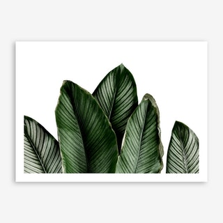 Green Palm Leaves Art Print