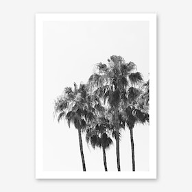 Palm Trees Art Print 1