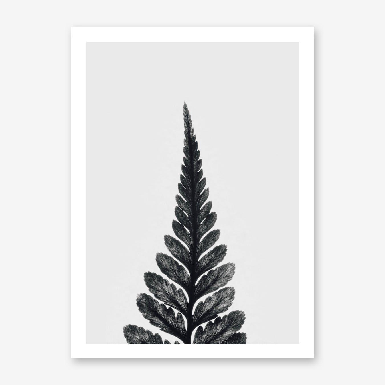 Botanical Fern Print I