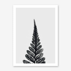 Botanical Fern Art Print I