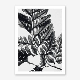 Botanical Fern Art Print II