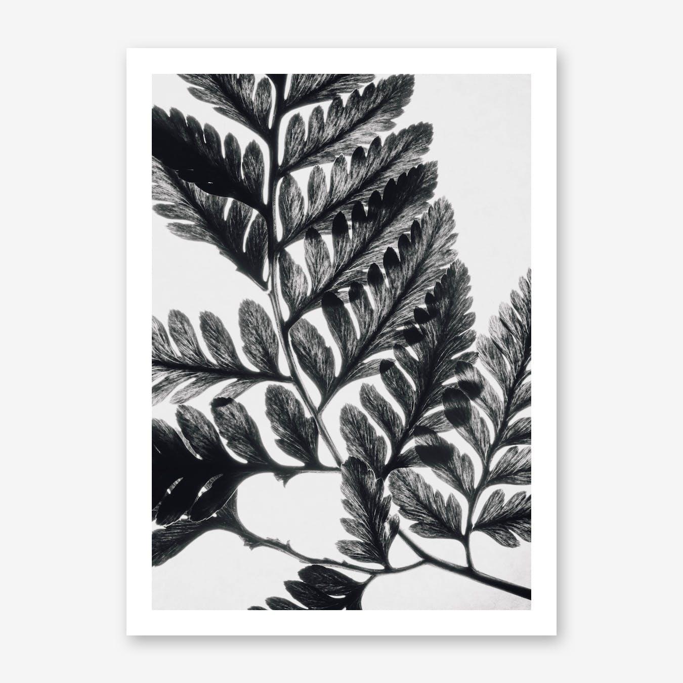 Botanical Fern Print II