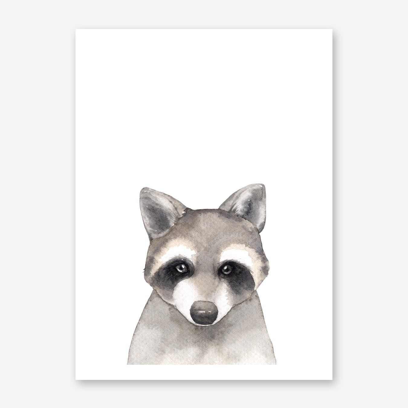 Nursery Raccoon