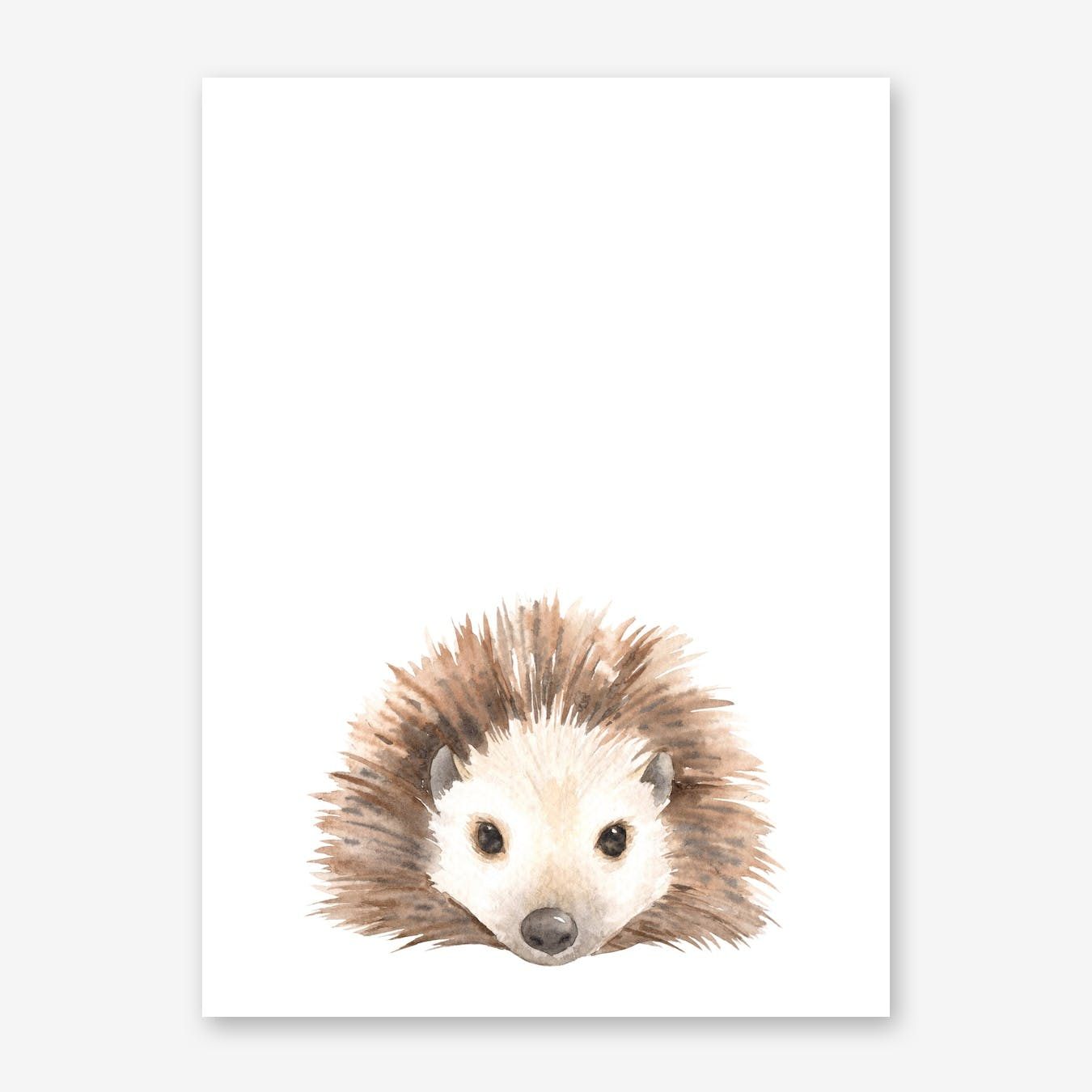 Nursery Hedgehog