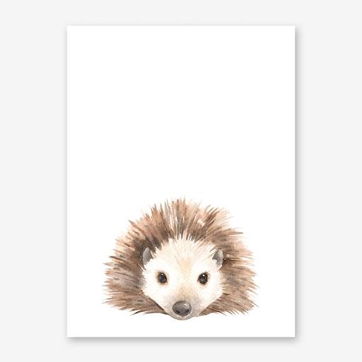 Nursery Hedgehog