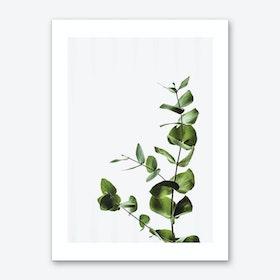 Elegant Green Plant Art Print