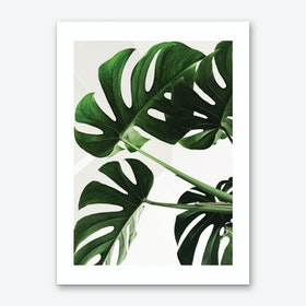 Full Green Plant Art Print