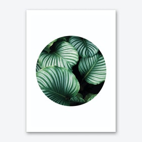 Green Leaf Circle Art Print