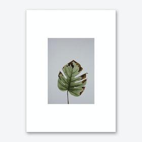 Leaf in Grey Box Art Print