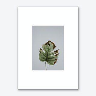 Leaf in Grey Box Art Print