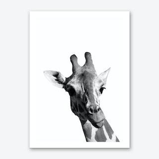 Monochrome Giraffe Art Print