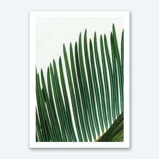 Plant Range set of 3 I Art Print