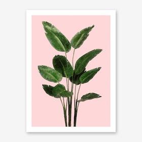 Bird of Paradise Plant on Pink Art Print