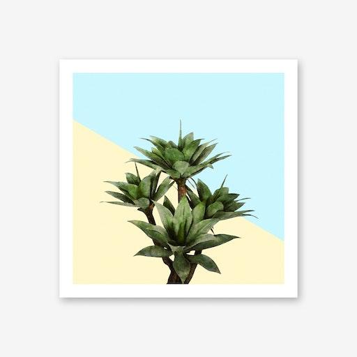 Agave Plant on Lemon and Teal Wall