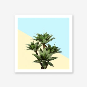 Agave Plant on Lemon and Teal Wall