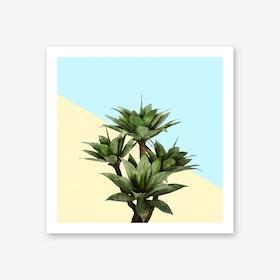 Agave Plant on Lemon and Teal Wall Art Print