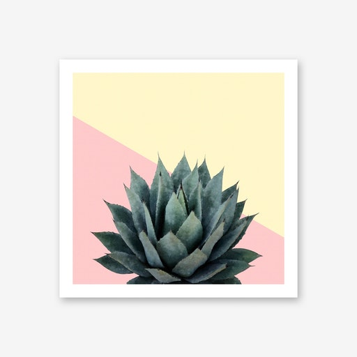 Agave Plant on Lemon and Pink Wall
