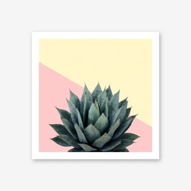 Agave Plant on Lemon and Pink Wall Art Print