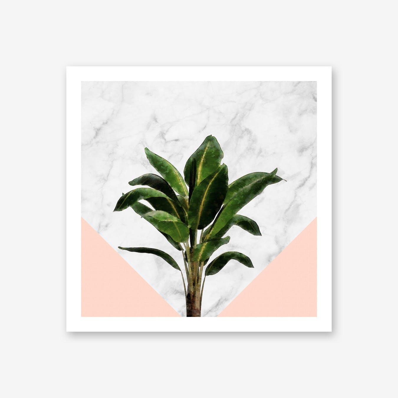 Banana Plant on Pink and Marble Wall