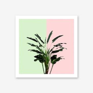 Banana Plant on Pink and Green Wall Art Print