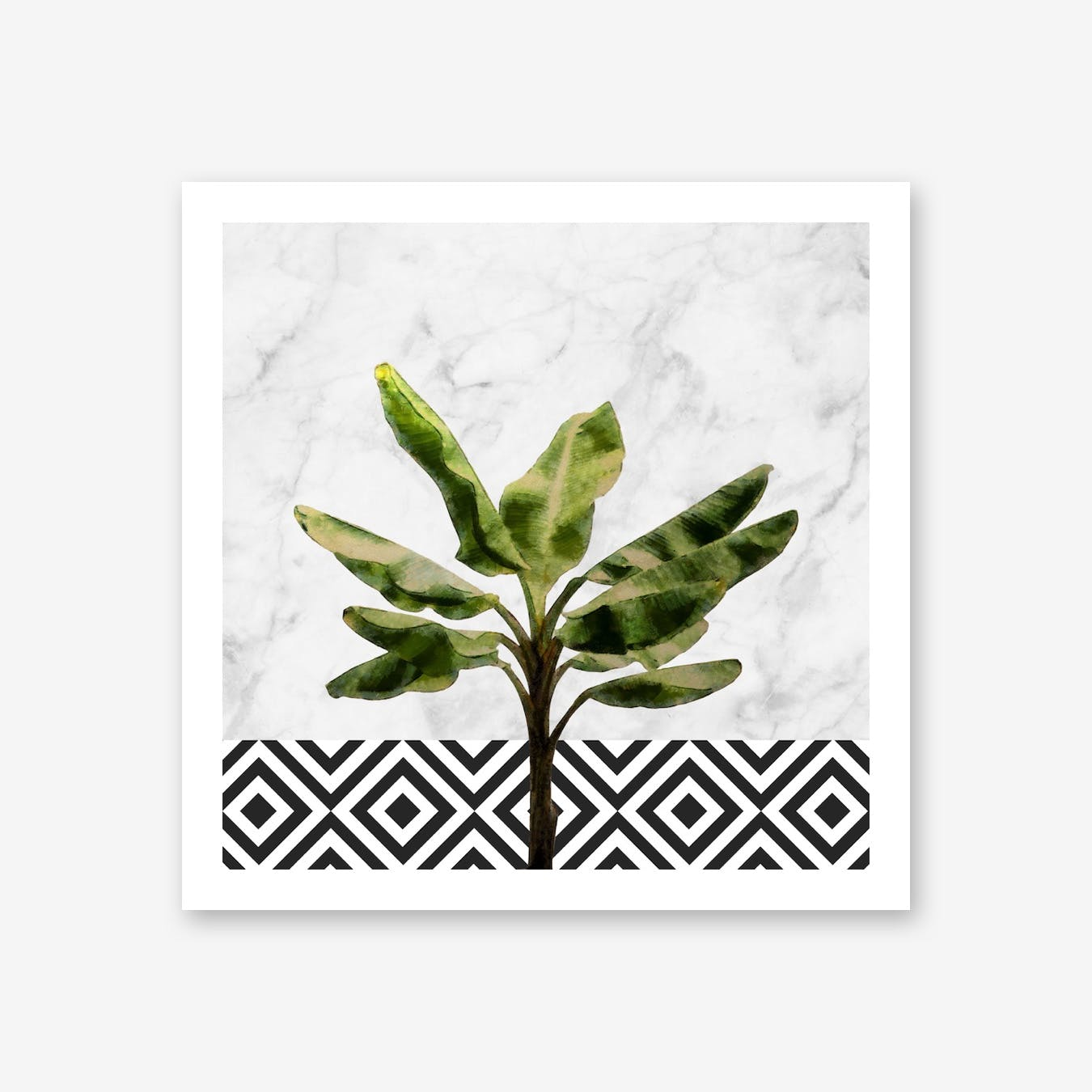 Banana Plant on White Marble and Checker Wall