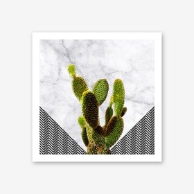 Cactus on White Marble and Zigzag Wall