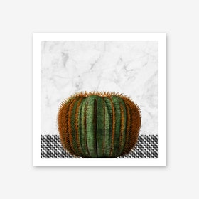 Cactus Ball on White Marble and Zigzag Wall