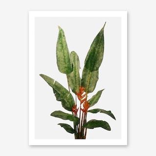 Bird of Paradise Plant on White Art Print