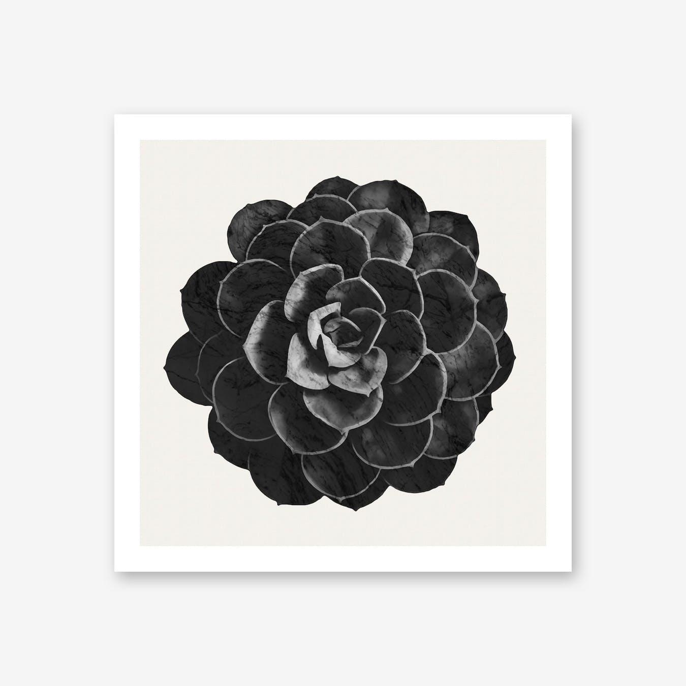 Succulent Black Marble