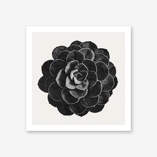 Succulent Black Marble Art Print