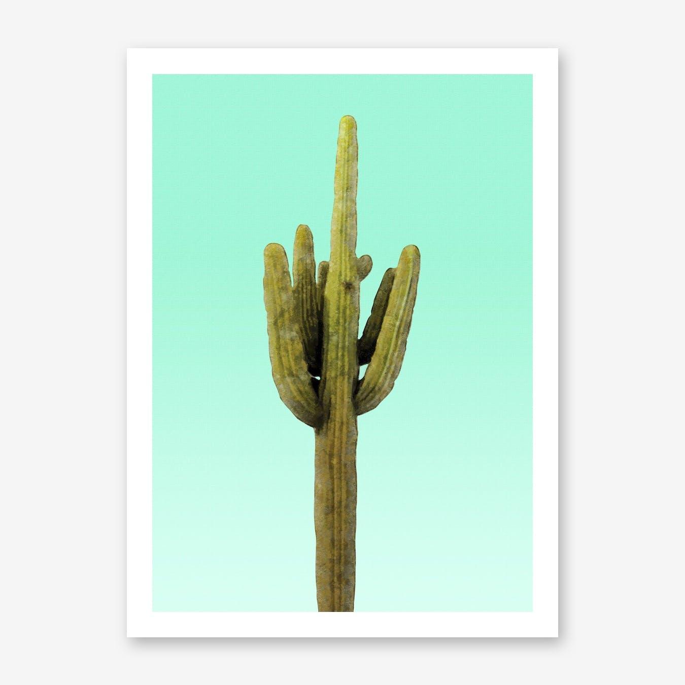 Cactus on Cyan Wall