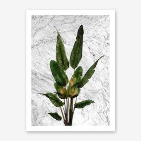 Bird of Paradise Plant on White Marble Art Print