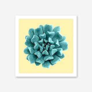 Cyan Succulent Plant on Yellow Art Print