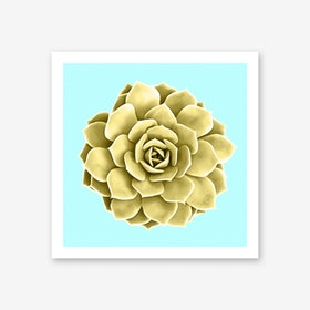 Yellow Succulent Plant on Teal