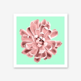 Pink Succulent Plant on Cyan