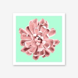 Pink Succulent Plant on Cyan Art Print