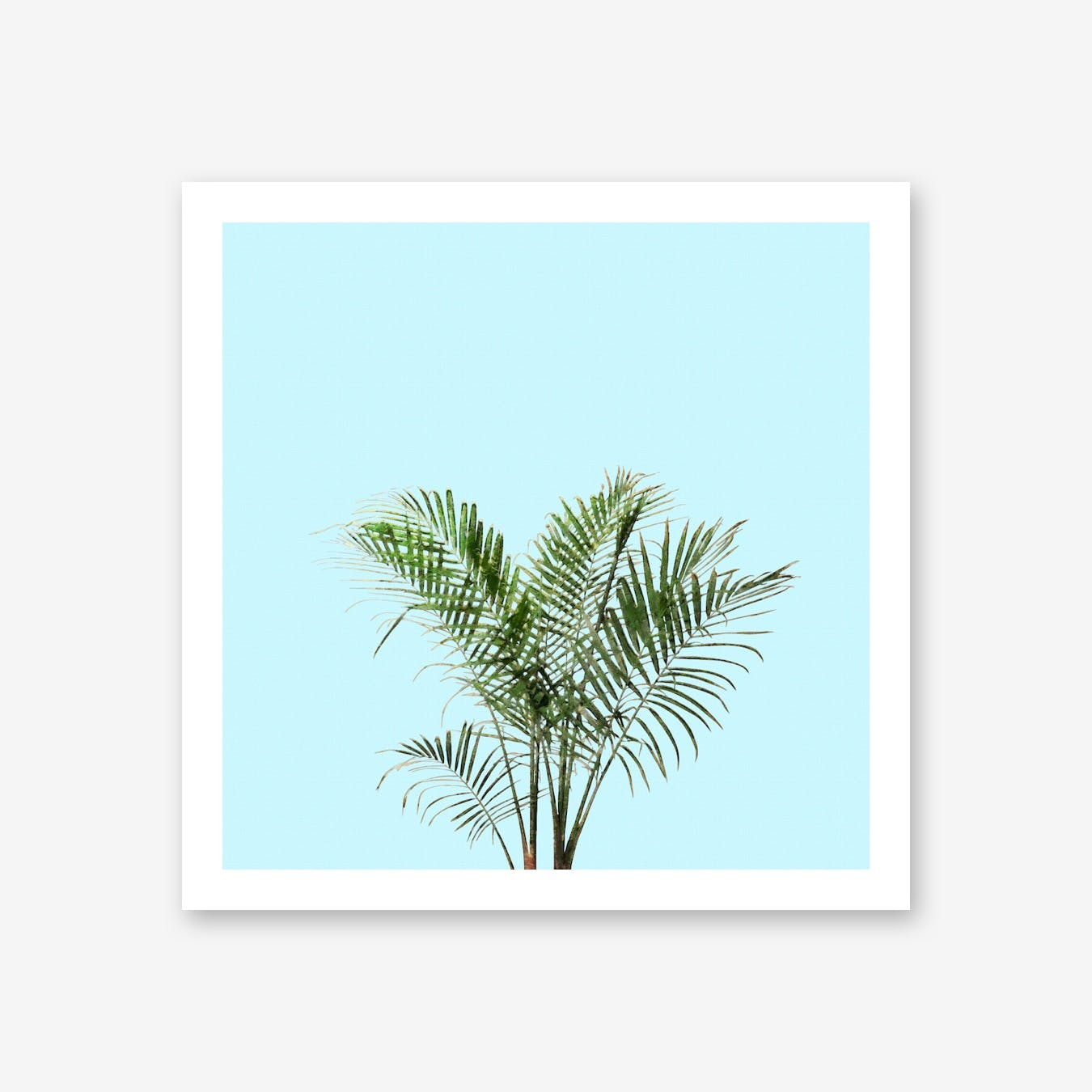 Palm Plant on Pastel Blue Wall