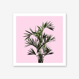 Palm Plant on Pastel Pink Wall Art Print
