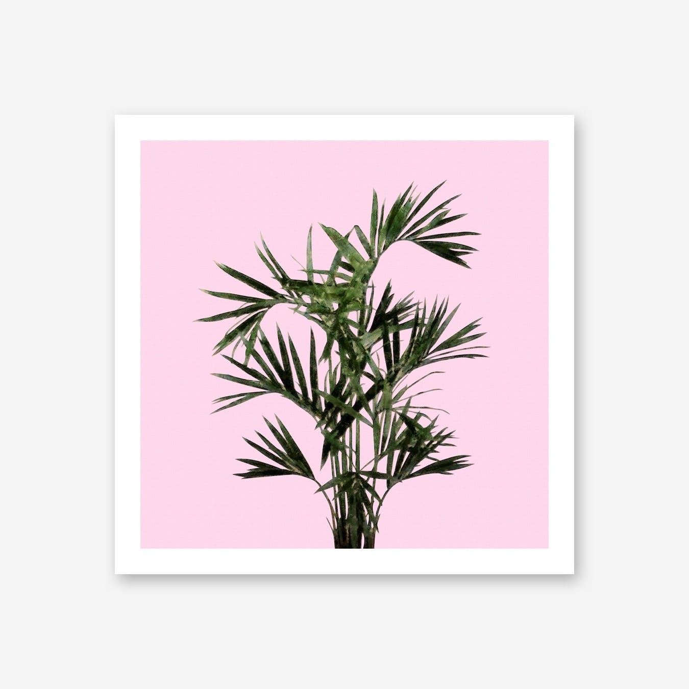 Palm Plant on Pastel Pink Wall