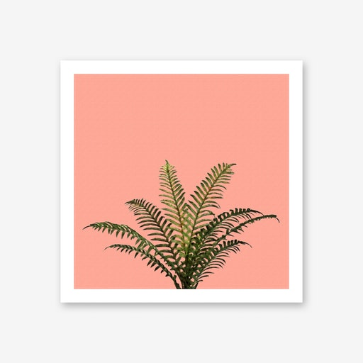 Palm Plant on Pastel Coral Wall