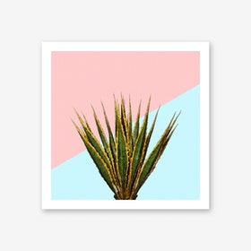 Agave Plant on Pink and Teal Wall Art Print