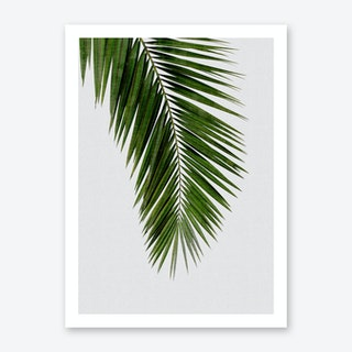Palm Leaf I Art Print