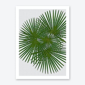Fan Palm Art Print
