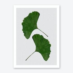 Ginkgo Leaf II Art Print