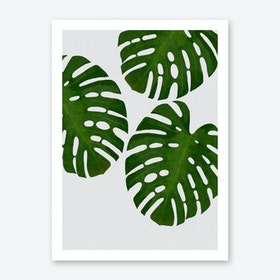 Monstera Leaf III Art Print